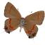 Calycopis_cecrops_v1x1